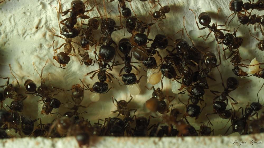 Самый секретный роддом мира муравейник, роддом
