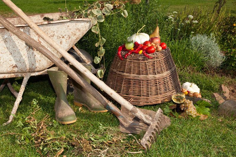 Что рядом с чем сажать на огороде