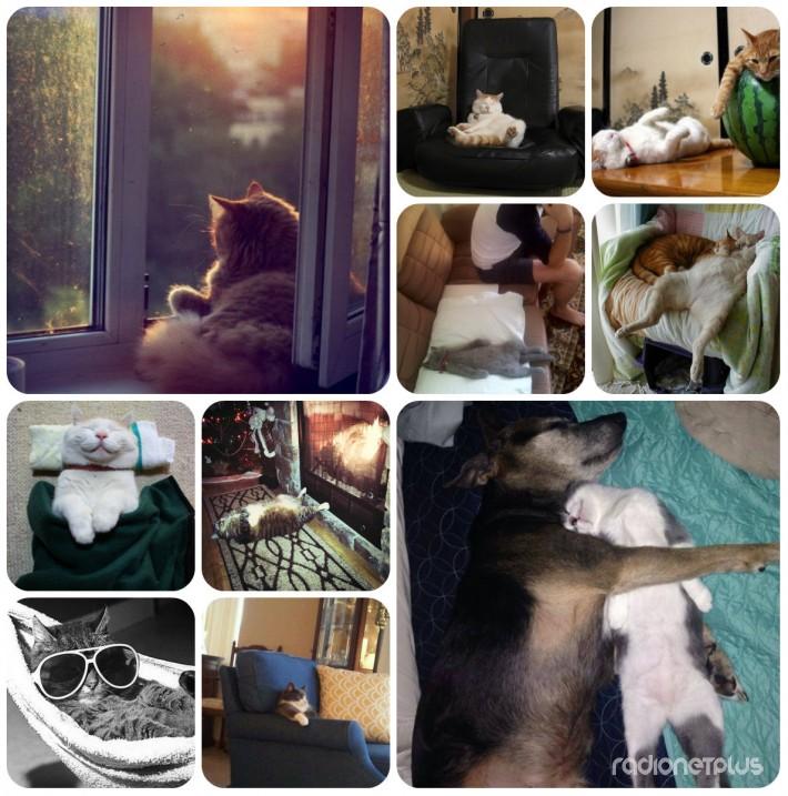 Котики, которые постигли искусство полного расслабления