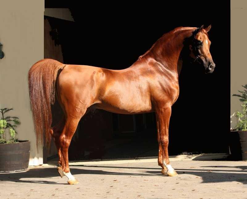 медуз Тунисе породы скаковых лошадей фото вице-губернатор Красноярского
