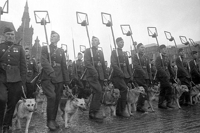 «Четвероногие солдаты». Как животные воевали за Победу