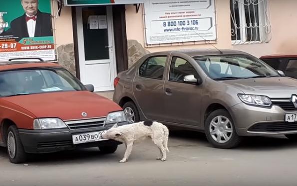 В Крыму собака воровала номе…
