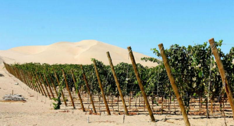 10 стран, где, оказывается, производят вкусное вино, а мы даже не знали об этом