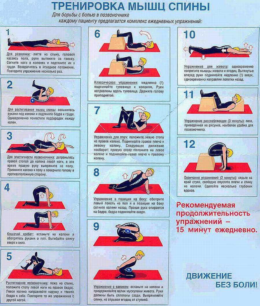 Укрепление мышц спины в домашних условиях в картинках