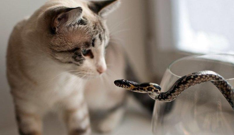20 бесстрашных котов, которых способен обратить в бегство только один предмет