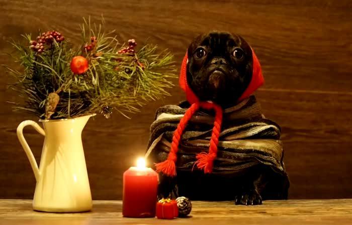 Хитрость, которая позволит свечам гореть всю новогоднюю ночь