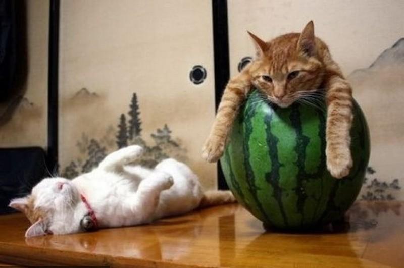 sleepingcats09 Коты, познавшие науку сна