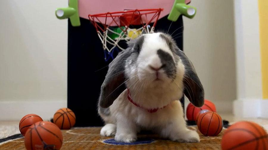 Кролик-баскетболист