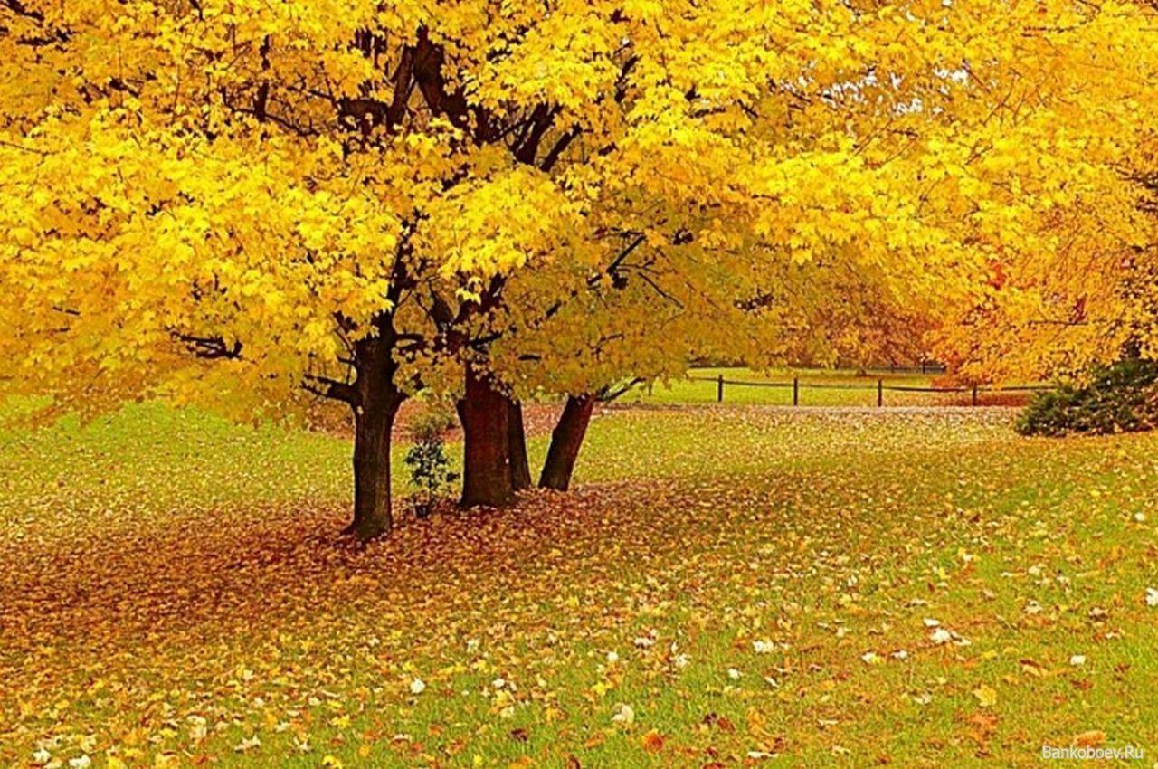 Золотая осень картинки детские 4