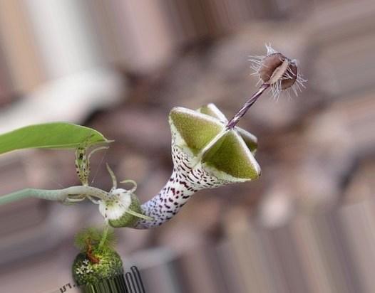 14 самых необычных и редких растений мира