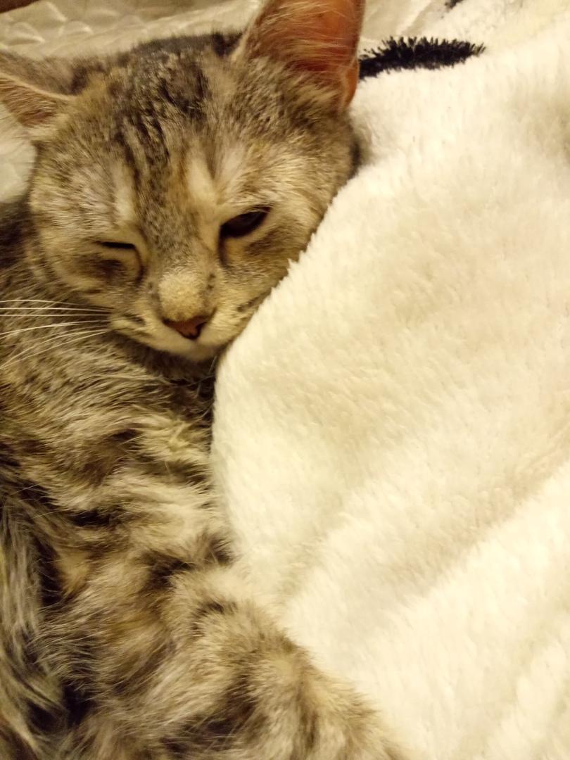 «У меня не кошка, а подарок!» Однажды два уличных котёнка стали домашними