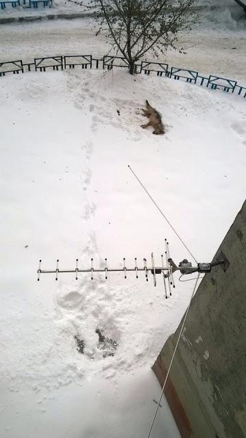 В Тюмени из окна выбросили собаку