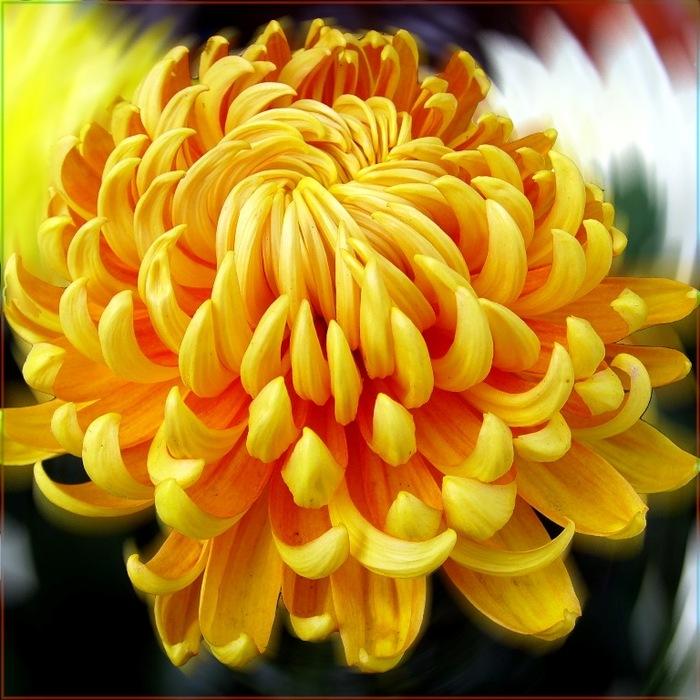 http://img1.liveinternet.ru/images/attach/c/1//48/831/48831535_0_1d0ac_dbf392ee_XL1.jpg