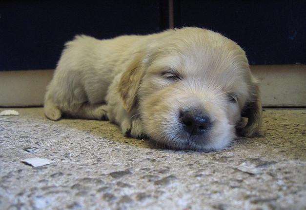 20 странных фактов о сне, о которых вы не знали