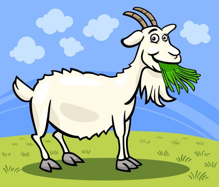 Как фермер решил подоить козу, нопопал в неприятную ситуацию