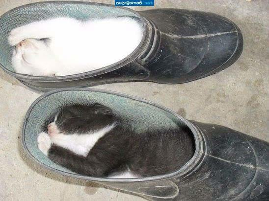 Кошки и обувь (21 фото)