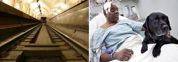 Слепой мужчина с собакой-поводырём попали под поезд и выжили.