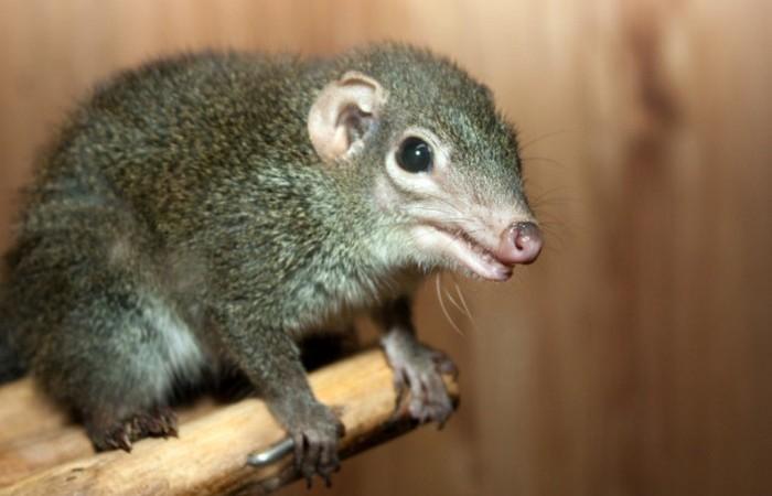 7. Самое древнее млекопитающее — хадрокодиум животные, земля, наука, эволюция