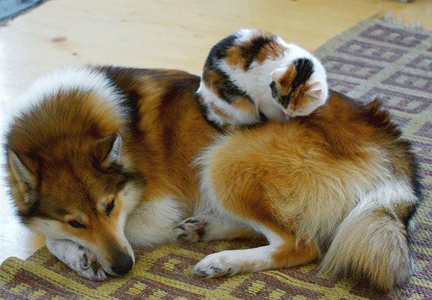 Нет уютнее подушки, чем ласковый и нежный друг!