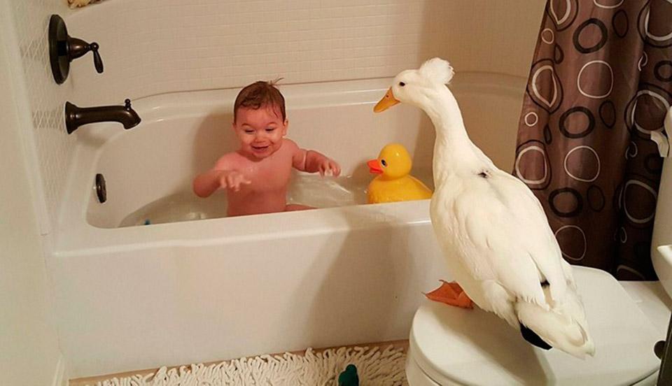 Мальчик и утка: настоящий друг, который не даст в обиду