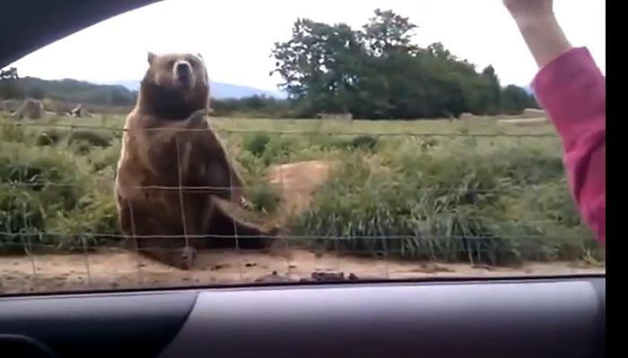 Видео, в котором животные и люди творят совершенно сумасшедшие вещи