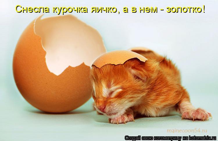 Котоматрица: Снесла курочка яичко, а в нем - золотко!