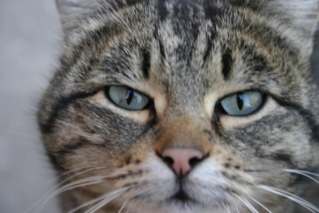 История одного дворового кота