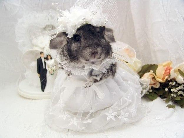 16. «Я тоже хочу замуж!» животные, позитив