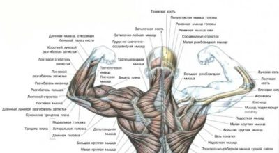 5 самых распространенных причин болей в спине
