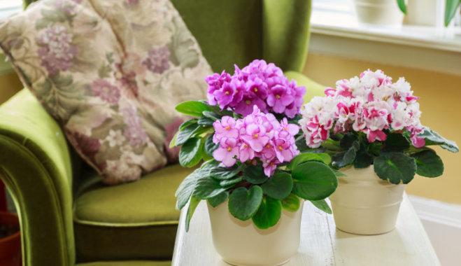 Как сделать так, чтобы цветы дома цвели пышно и долго