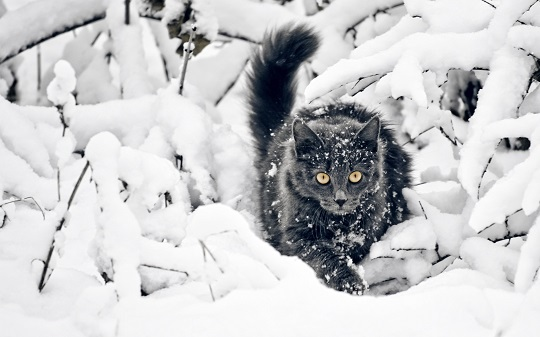 cat-fluffy-branches-snow-hunting-3840x2400