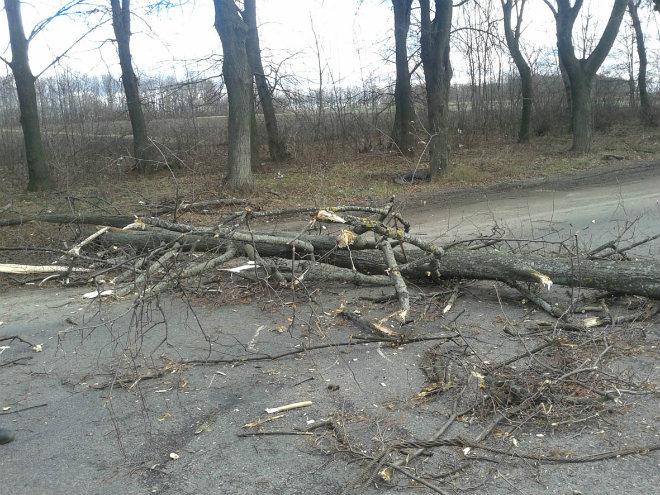 Непогода в Украине: обесточены 147 населенных пунктов, повалены деревья