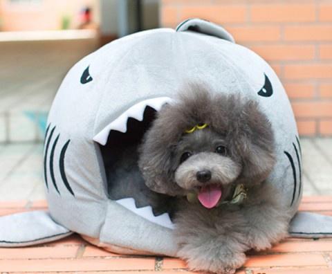 Акула-домик