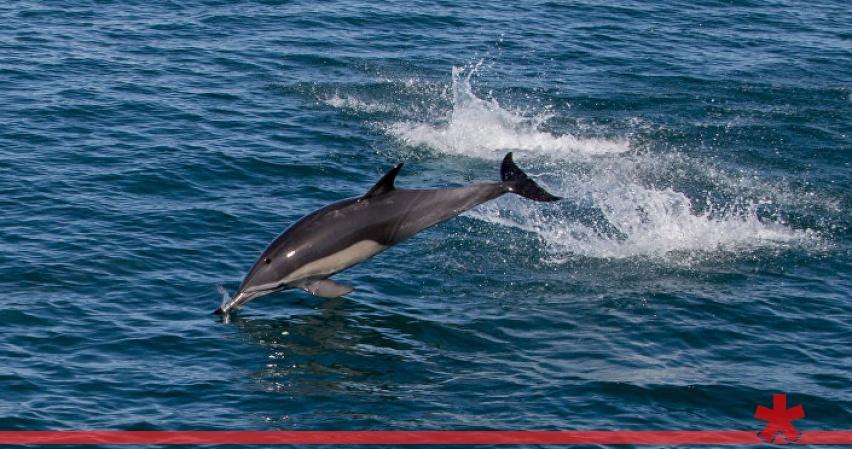 В Крыму ищут причины массового выброса на берег осетров и дельфинов