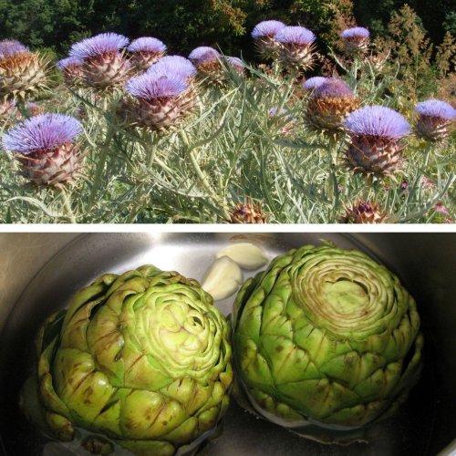 Растения, на которых растут известные нам продукты (11 фото)