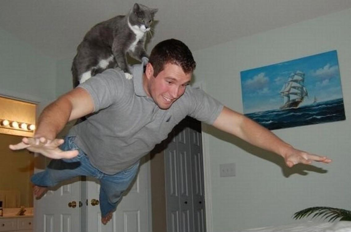 lolcats68 100 лучших фотографий кошек всех времен и народов