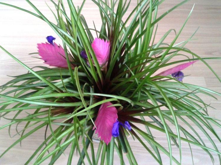 13 странных растений, которые могут расти у вас дома дом, растения