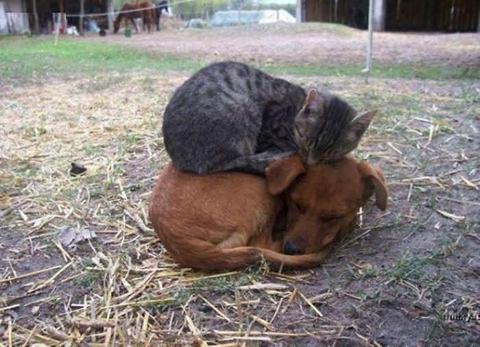 Собака и кот.