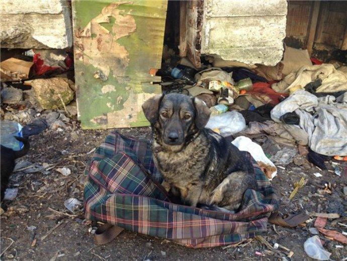 Верная собака не бросила своего хозяина-преступника