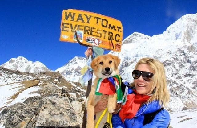 Рупи - бывший бродячий пес, который недавно вошел в историю, став самой первой в мире собакой, взобравшейся на Эверест.
