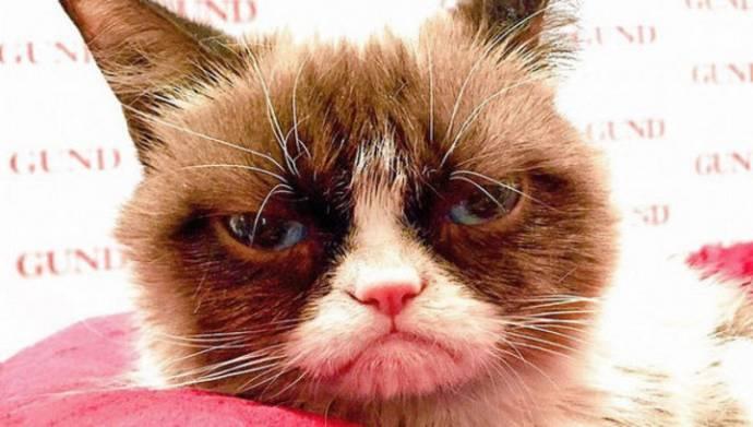 1 марта - прошёл Международный день кошек: Пять историй, которые нас удивили