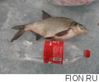 Отчет о рыбалке: 14 марта 2015, 15 марта 2015, Яузское водохранилище