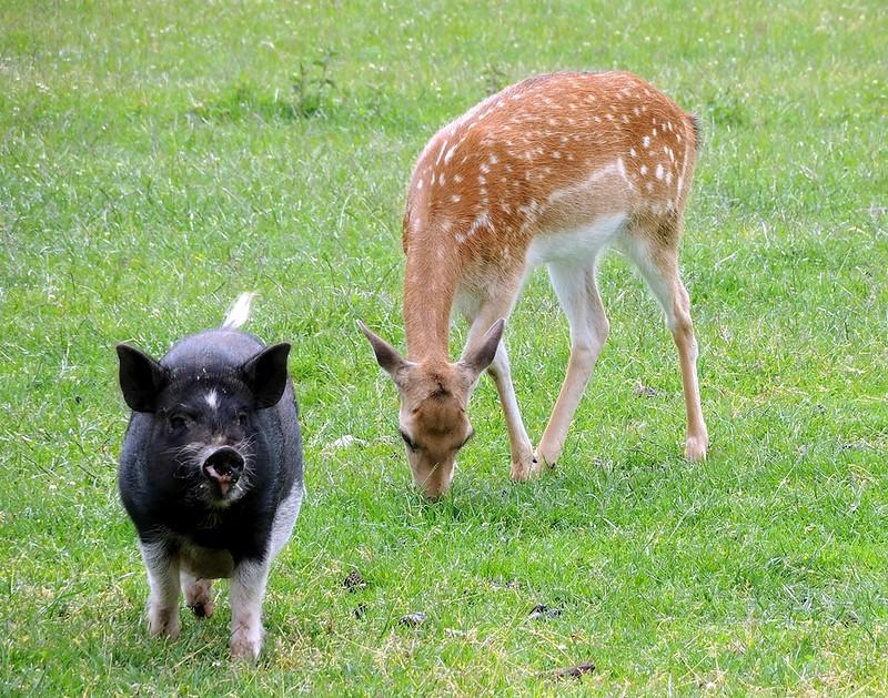 Этот удивительный-удивительный мир, животных