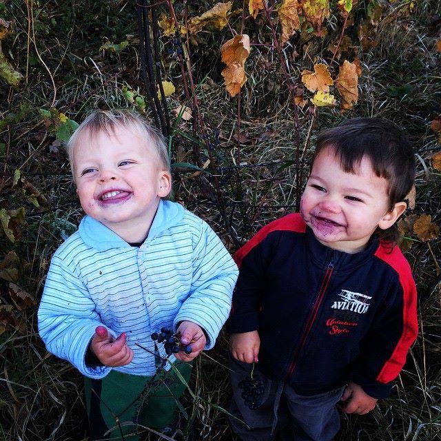 дети наелись винограда