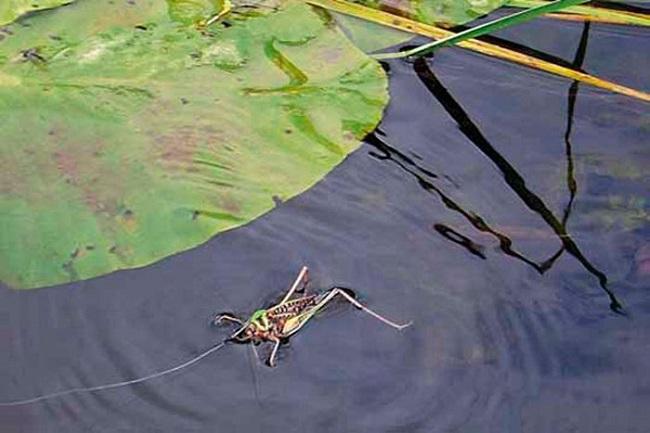 ловля голавля с поверхности воды