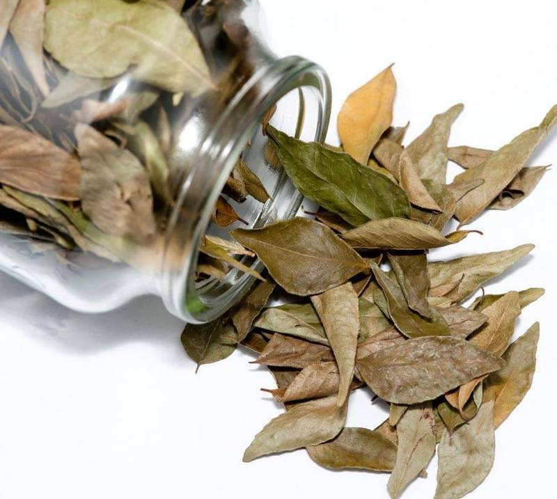 Дышать лавровым листом