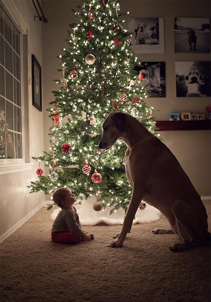 Маленькие детки и их большие собаки