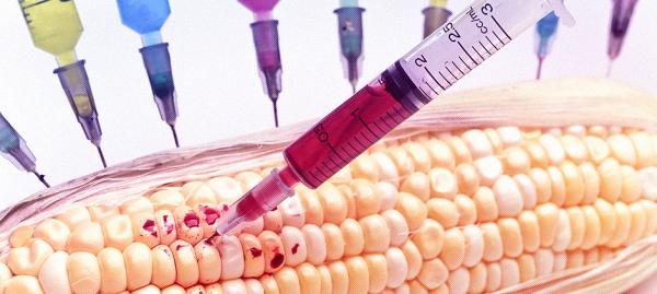 США устанавливают продовольственную диктатуру с помощью ГМО