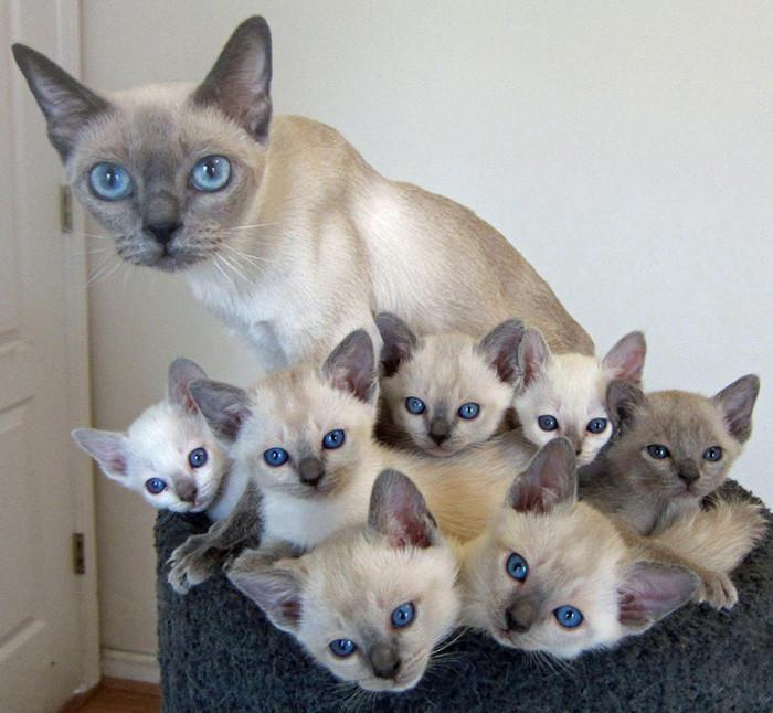 Кошки тоже гордятся своими детками!)