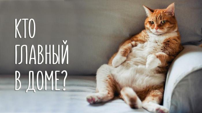 Кто в доме главный  ))